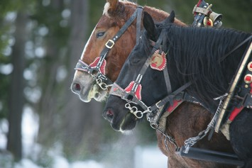 Activities and winter sport in Val di Fassa - Horse riding, riding ...